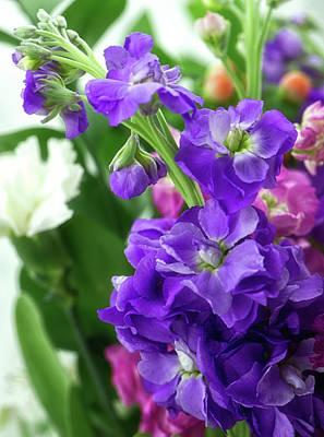 Photograph - Purple Bouquet by Nancy Kirkpatrick