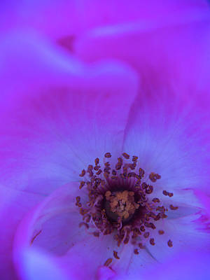 Photograph - Purple Bud by Stewart Helberg