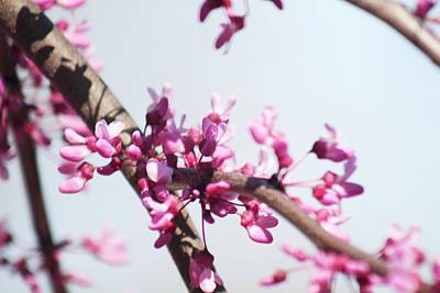 Photograph - Purple Buds by Monica Whaley