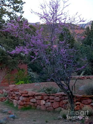 Photograph - Purple Buds Sedona Spring by Marlene Rose Besso