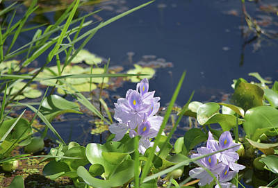 Photograph - Purple By The Marsh by William Tasker