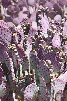 Photograph - Purple Cactus Vertical by Carol Groenen