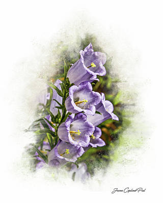 Photograph - Purple Canterbury Bells by Joann Copeland-Paul