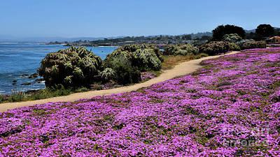 Photograph - Purple Carpet by Gina Savage