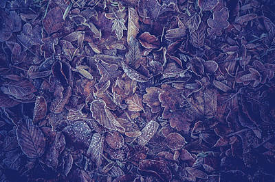 Vintage Stamps - Purple Carpet of Frozen Leaves by Jenny Rainbow