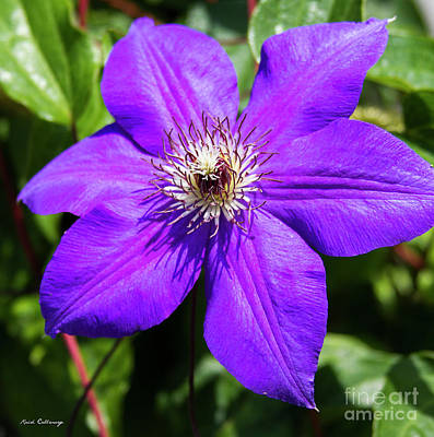 Photograph - Purple Charmer 2 Clematis Flower Art by Reid Callaway