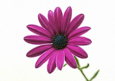 Purple Chrysanthemum Art Print by Lanjee Chee