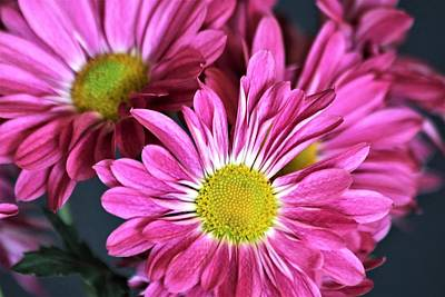 Photograph - Purple Chrysanthemums by Sheila Brown