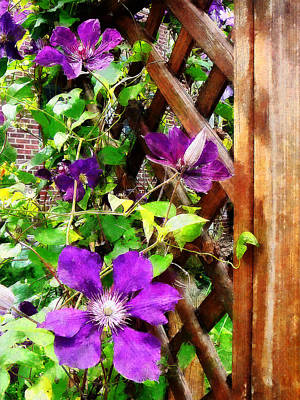 Photograph - Purple Clematis On Trellis by Susan Savad