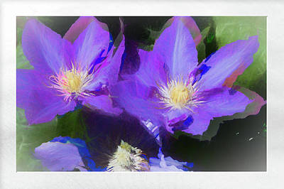 Photograph - Purple Clementis by Natalie Rotman Cote