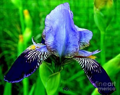 Shower Digital Art - Purple Coated Iris by Marsha Heiken