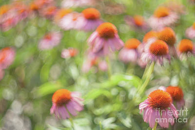 Photograph - Purple Cone Flowers by Iris Greenwell