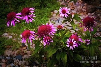Photograph - Purple Cone Flowers by Jon Burch Photography