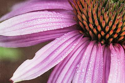 Photograph - Purple Coneflower by Cindi Ressler