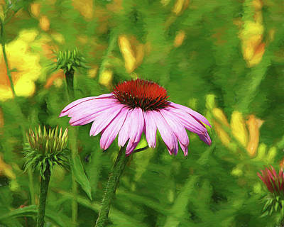 Photograph - Purple Coneflower by John Freidenberg