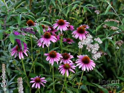 Photograph - Pink Coneflower by Marcia Lee Jones