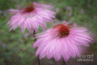 Photograph - Purple Coneflower by Marianne Jensen