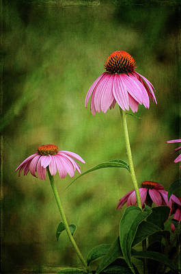 Photograph - Purple Coneflowers by Susan McMenamin