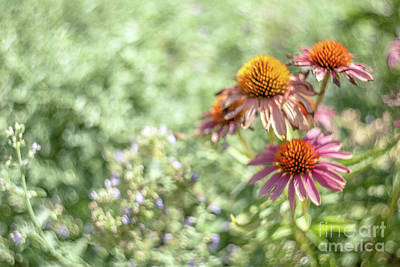 Photograph - Purple Cones Blooms by Iris Greenwell