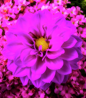 Photograph - Purple Dahlia And Kalanchoe Flowers by Garry Gay