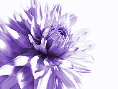 Photograph - Purple Dahlia Floral by Jennie Marie Schell