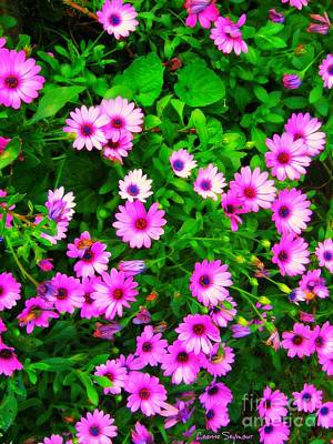 Photograph - Purple Daisies by Leanne Seymour