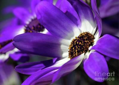 Purple Daisy Art Print by Sabrina L Ryan