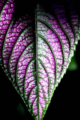 Photograph - Purple by David Weeks