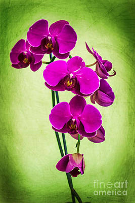 Photograph - Purple Delight Orchid by Roberta Byram