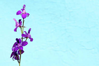 Photograph - Purple Delphinium Space To Think by John Williams