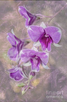 Phalenopsis Photograph - Purple Dendrobium With Textures by Michelle Meenawong