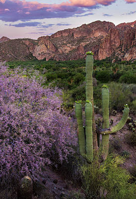 Desert Sunset Photograph - Purple Desert Beauty by Dave Dilli