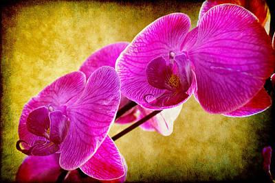 Photograph - Purple Dragon by Milena Ilieva