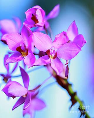 Photograph - Purple Dream by Eyzen M Kim