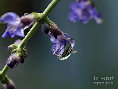 Photograph - Purple Droplet by Mary Haber
