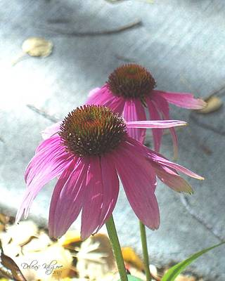 Photograph - Purple Echinacea by Deleas Kilgore