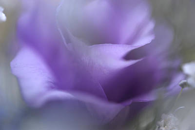 Photograph - Purple Ethereal Breath by Jenny Rainbow