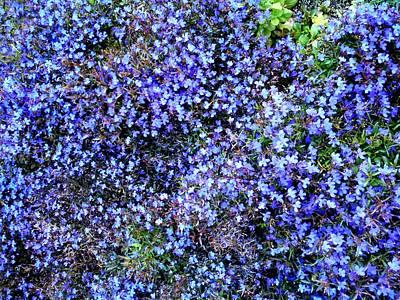 Photograph - Purple Field by Dietmar Scherf