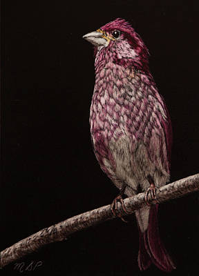 Painting - Purple Finch by Margaret Sarah Pardy