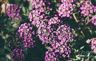 Photograph - Purple Floral by Andrea Anderegg