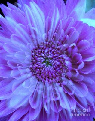 Photograph - Purple Floral Overlay by Joan-Violet Stretch