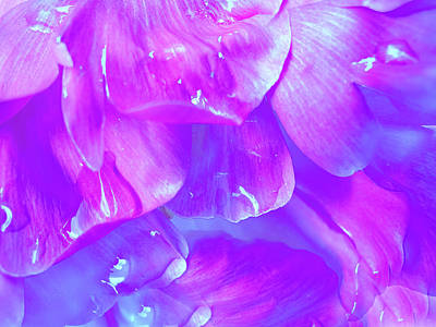 Lilac Photograph - Purple Flower After Rain by Nat Air Craft