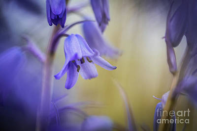 Photograph - Purple Flower  by Alissa Beth Photography
