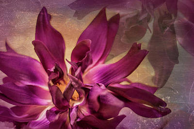 Photograph - Purple Flower Haze by Elvira Pinkhas