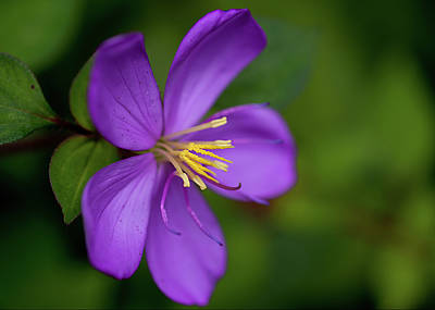 Photograph - Purple Flower Macro by Dan McManus