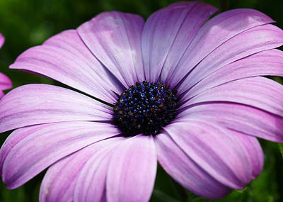 Purple Flower Macro Art Print