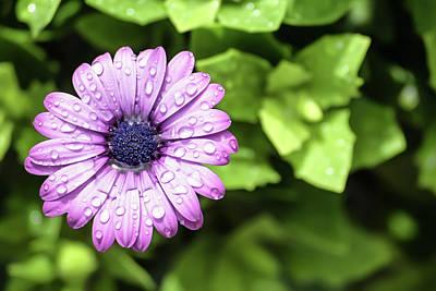 Photograph - Purple Flower On Green by Brett Christensen