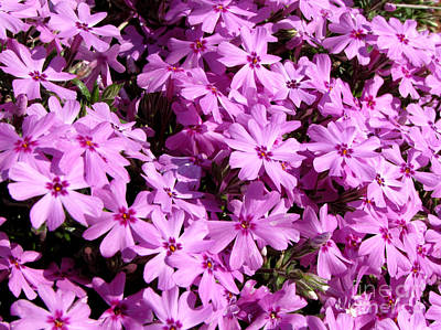 Purple Flower Power Art Print by Gardening Perfection