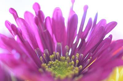 Photograph - Purple Flower by Stella Marin