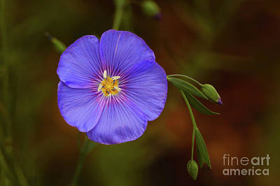 Photograph - Purple Flower by Svetlana VanKempen